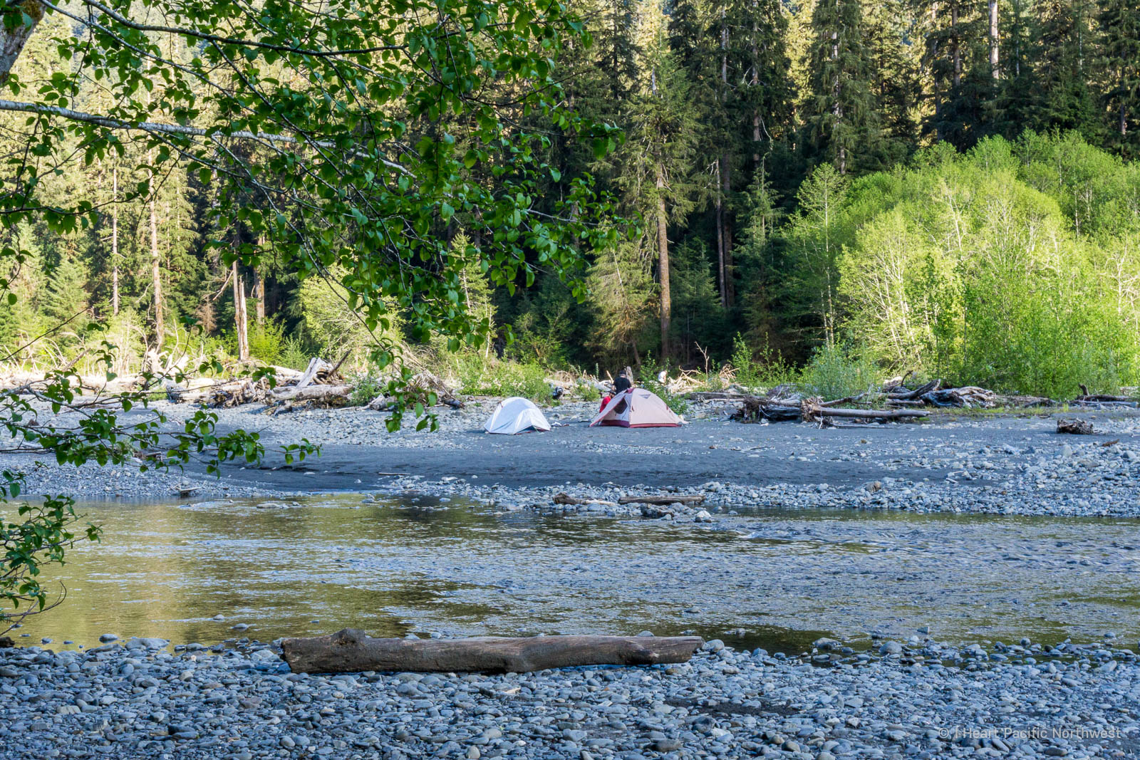 Hoh River Trail backpacking trip