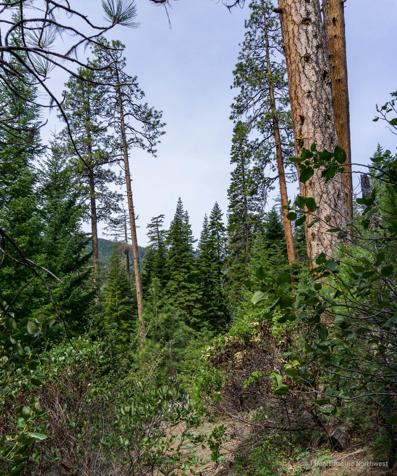 Badger Creek Wilderness backpacking trip
