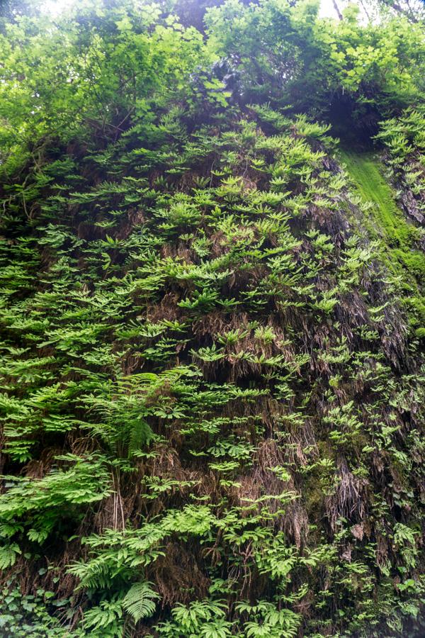 Redwoods National Park Fern Canyon hike