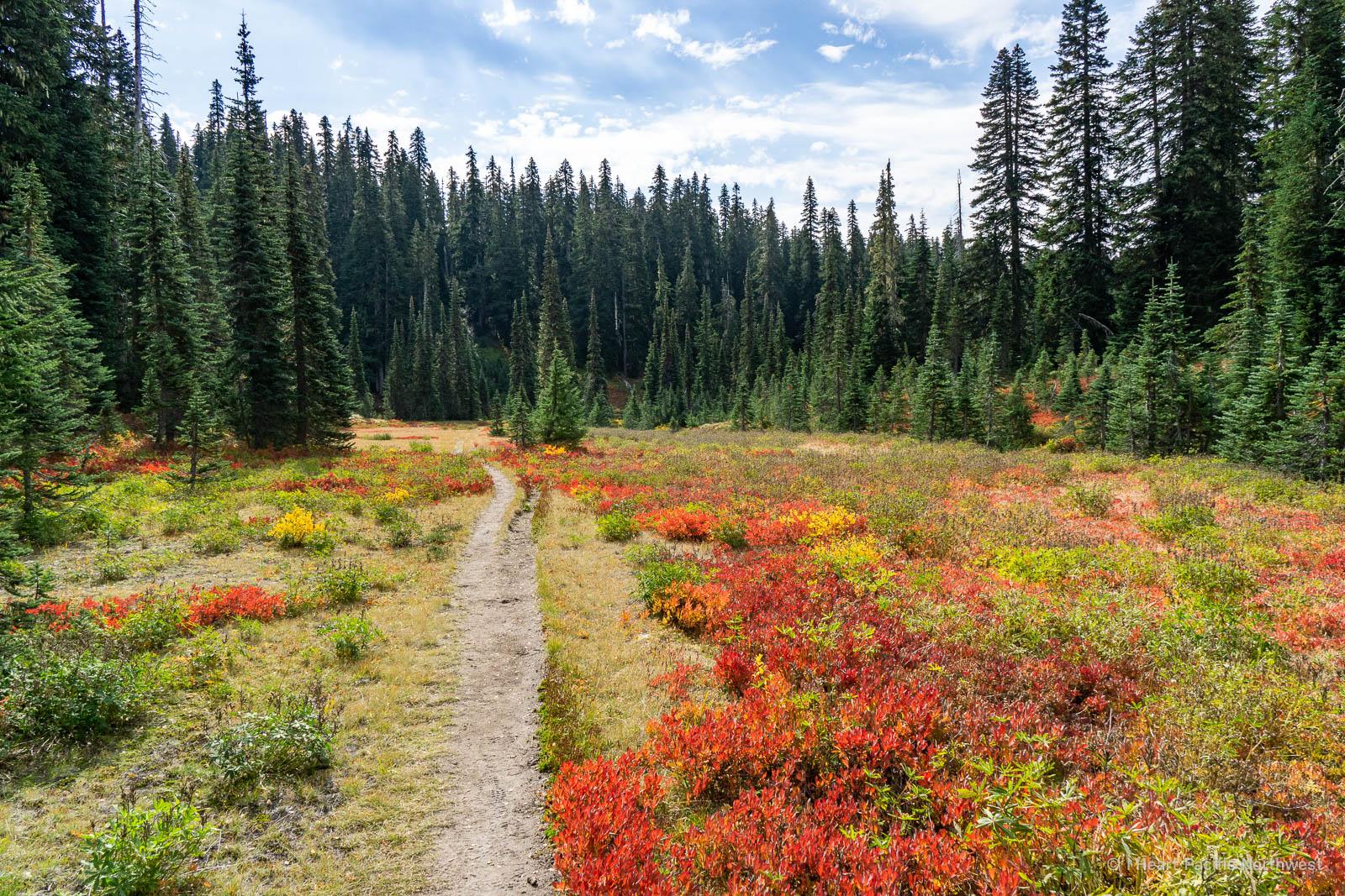 Indian Heaven Wilderness - Deep Lake backpacking trip