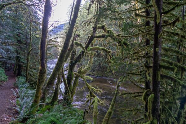 Old Salmon River hike