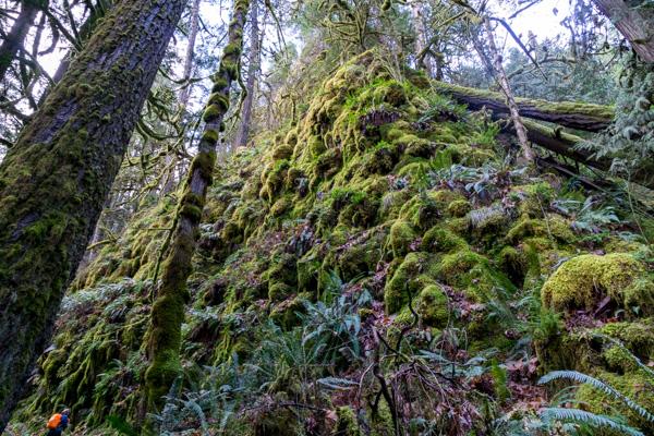 Clackamas River Trail hike