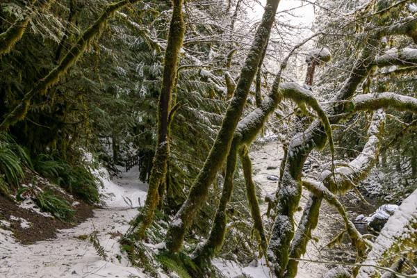 Old Salmon River Trail snowshoe