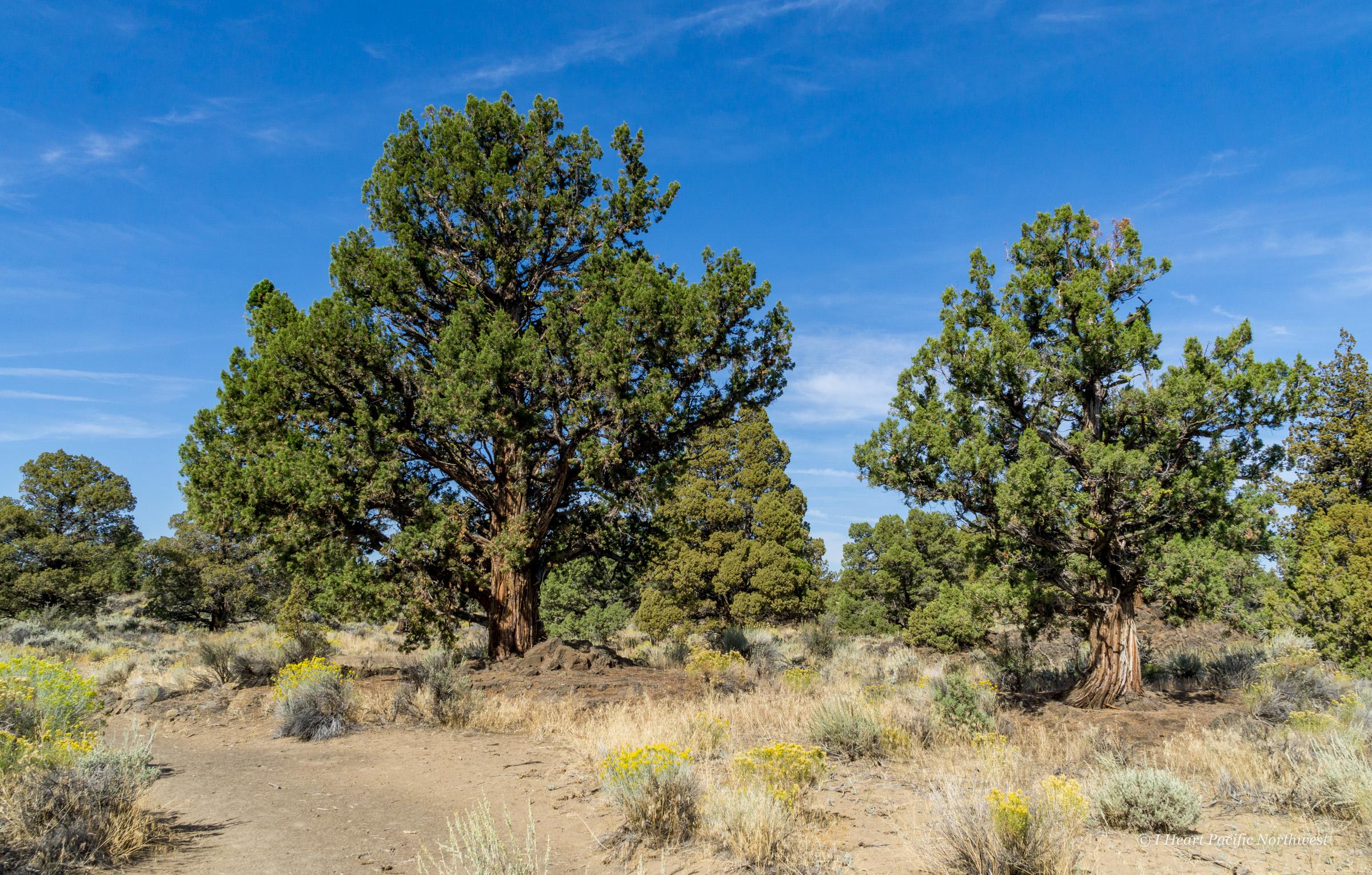 Oregon Badlands Wilderness hike