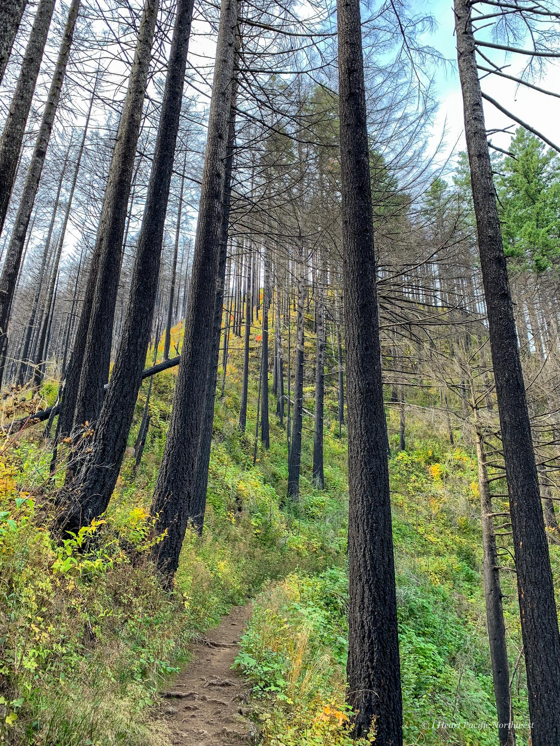 Multnomah-Wahkeena loop hike