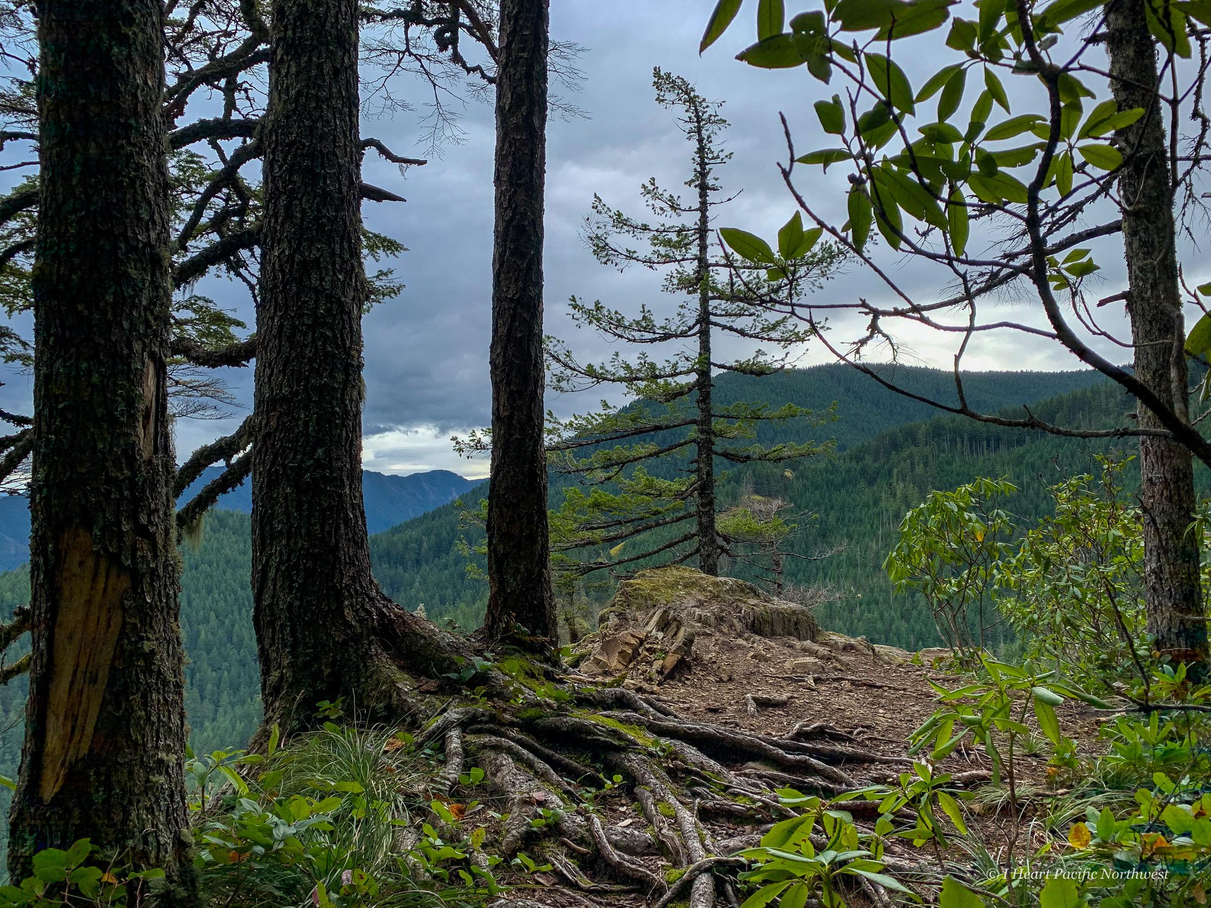 Huckleberry Mountain via Boulder Ridge hike
