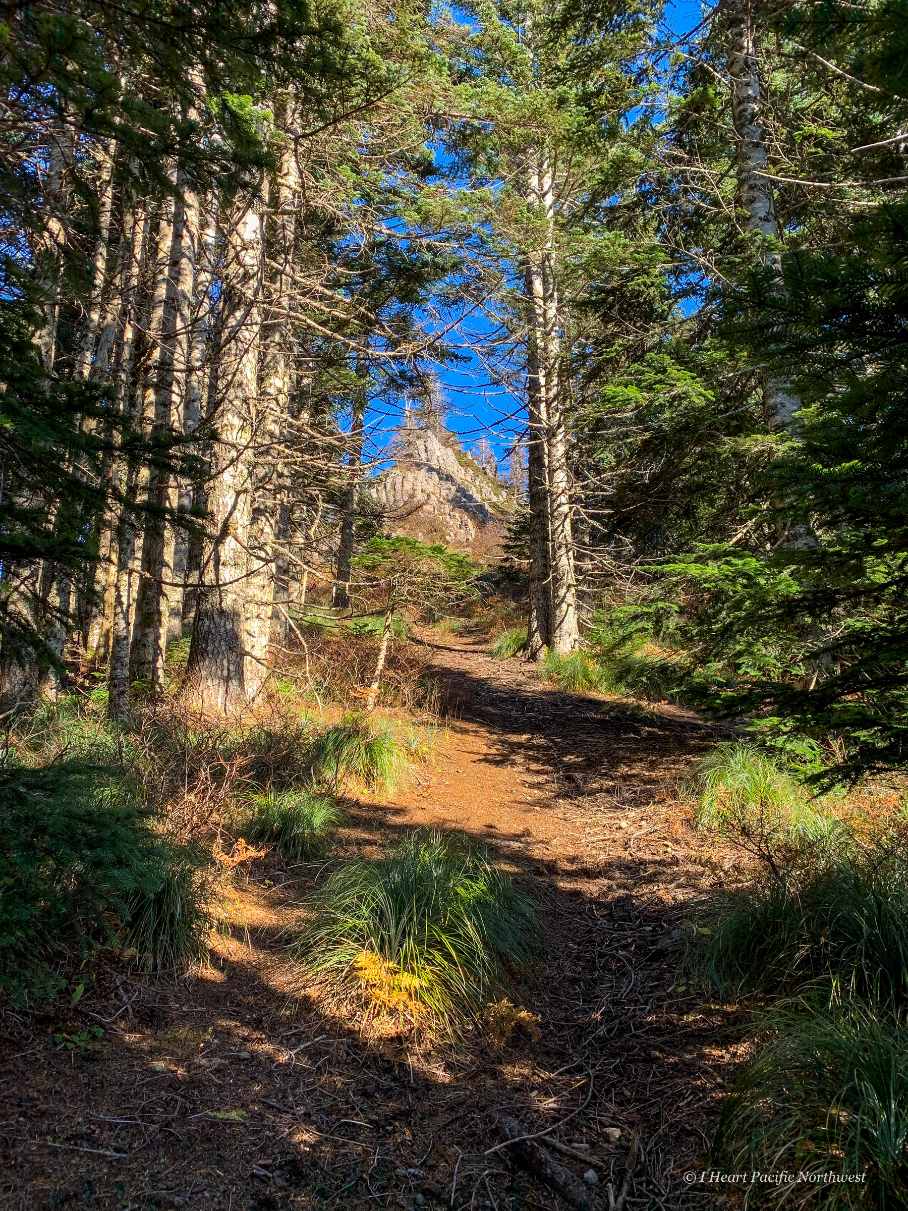 Silver Star Mountain hike