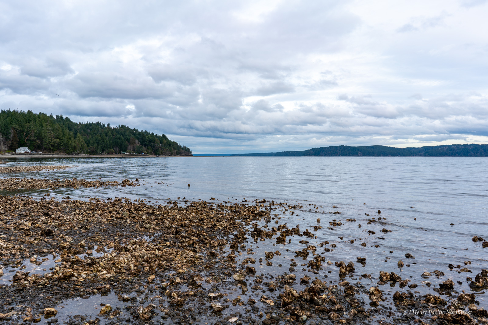 Hood Canal oyster beds