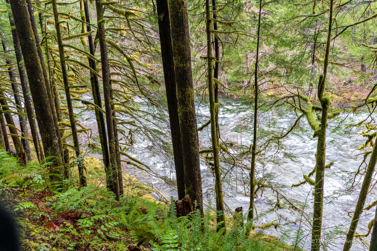 Little North Santiam River Trail hike