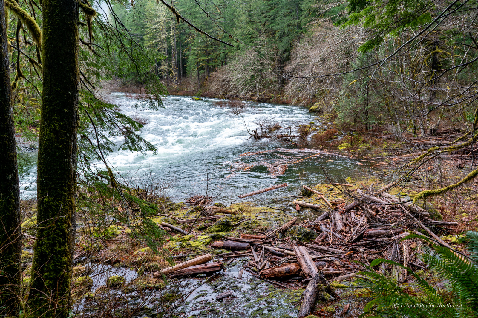 Little North Santiam River Trail hike