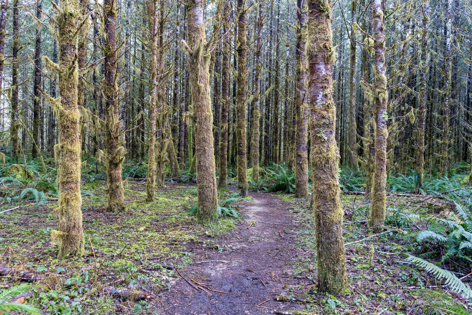 Little North Santiam River Trail