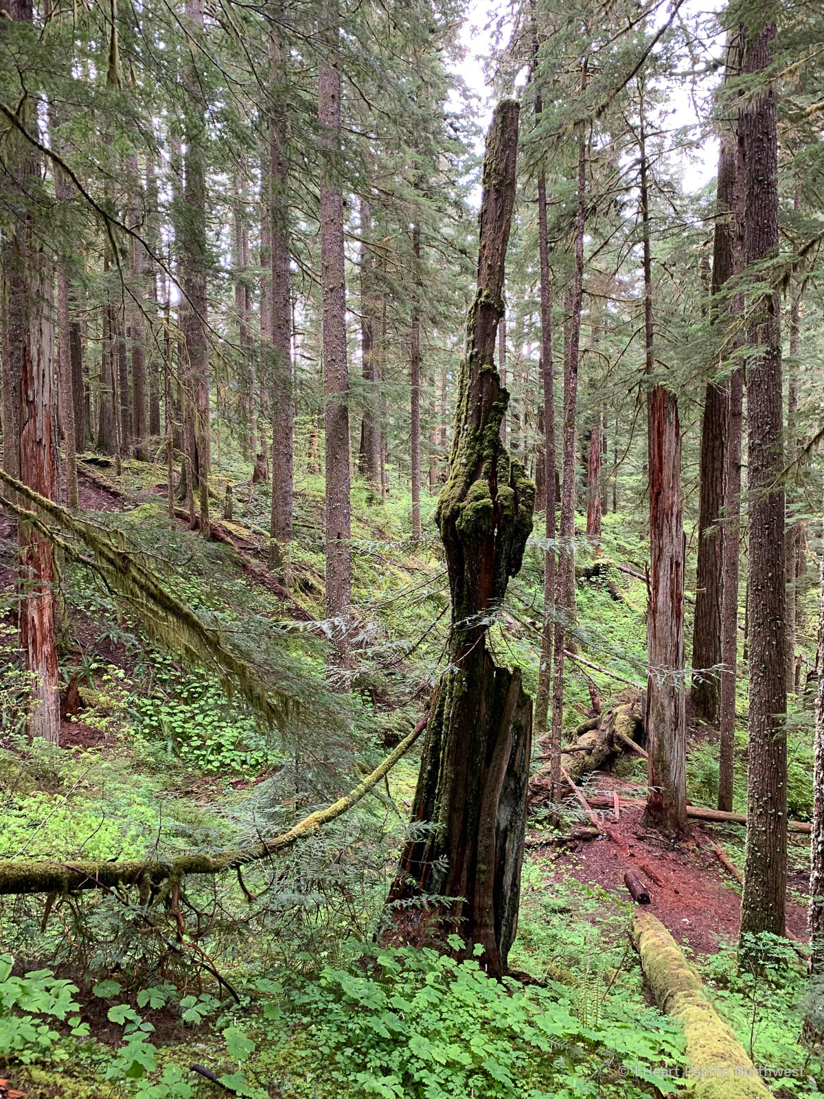 Trapper Creek Trail hike