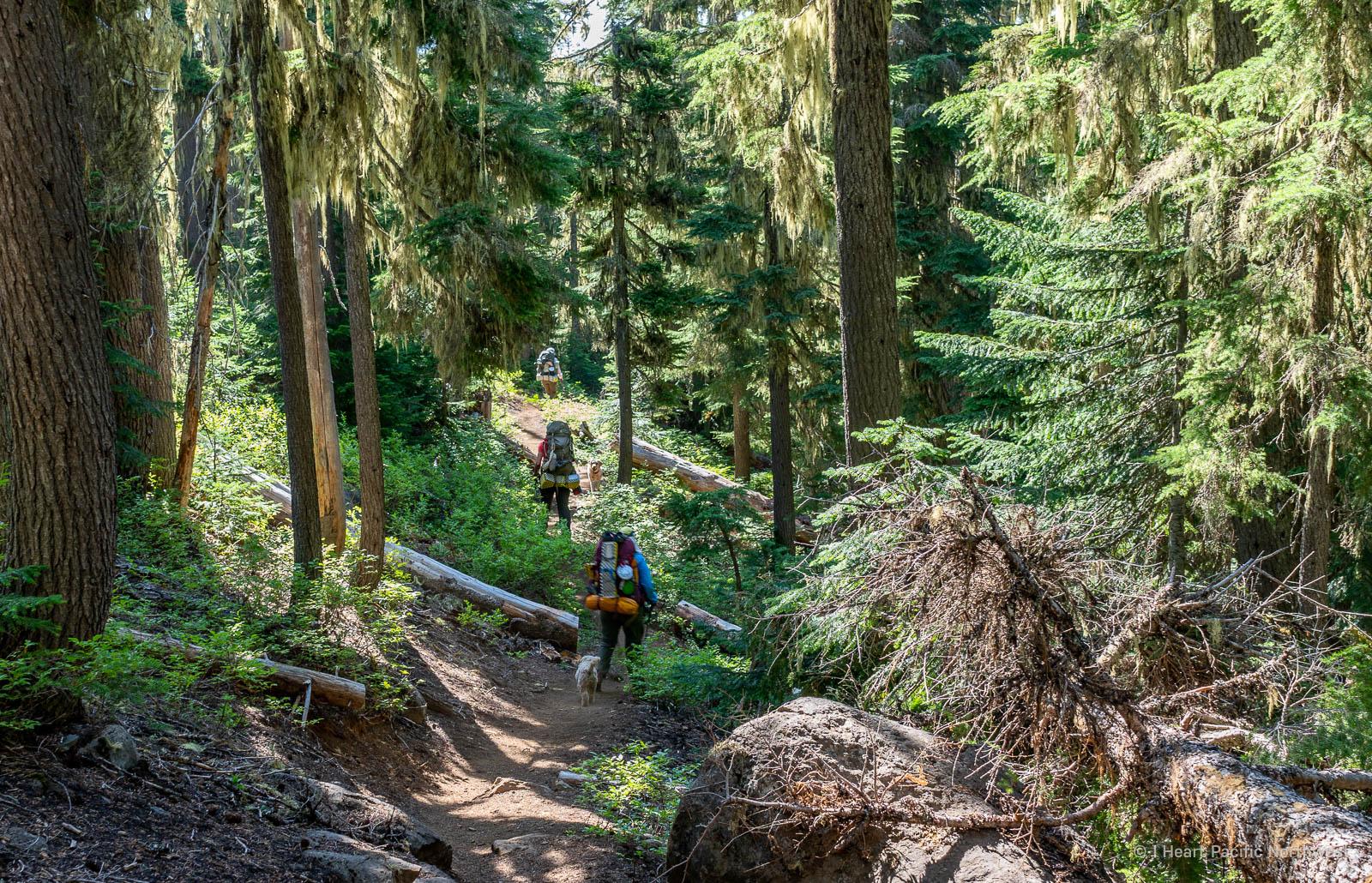 Mount Washington Wilderness - Tenas Lakes backpack trip
