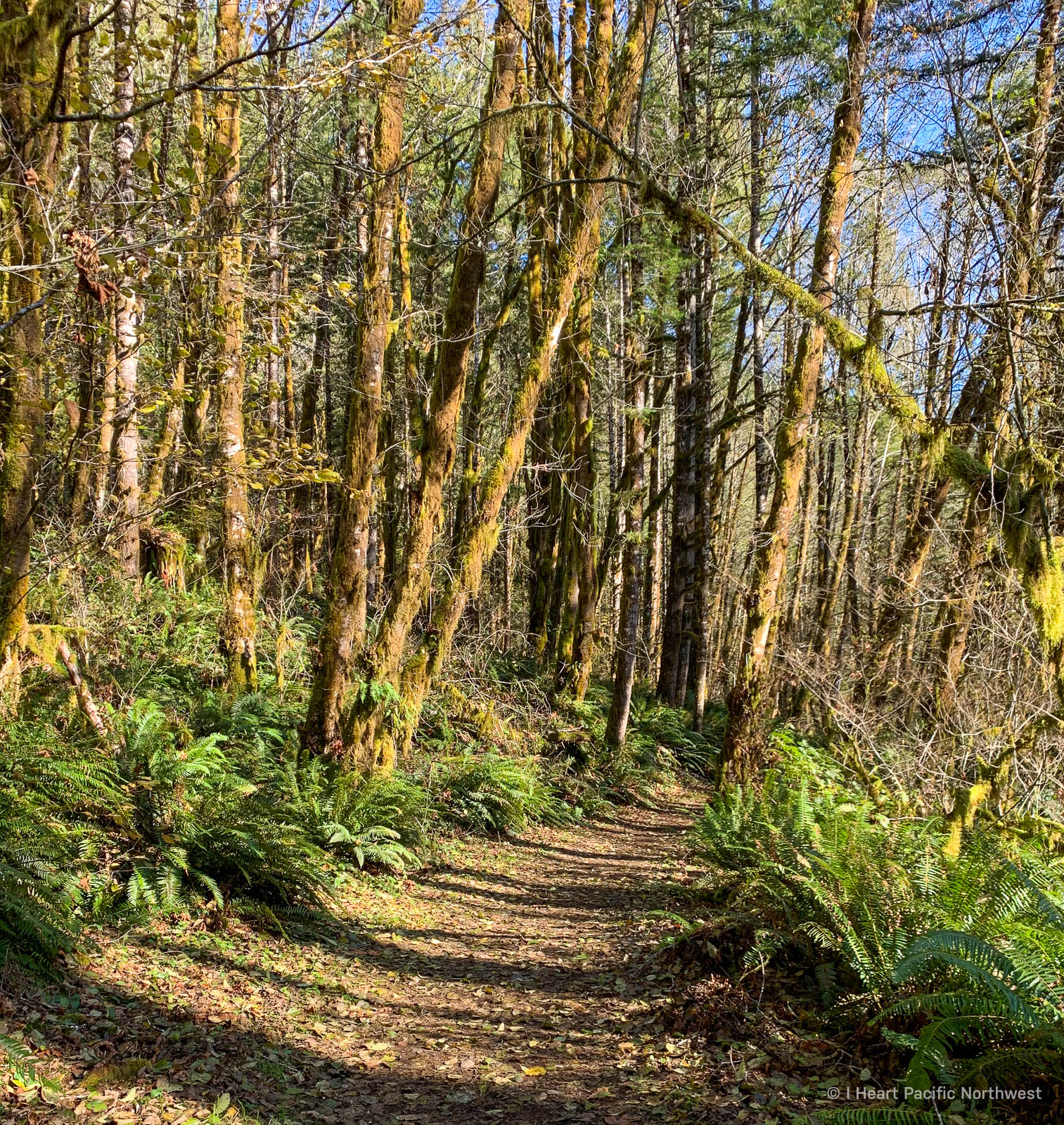 Oregon Coast Range - Wilson River Trail hike