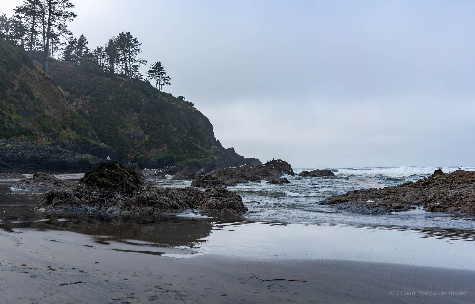Cape Disappointment camping trip
