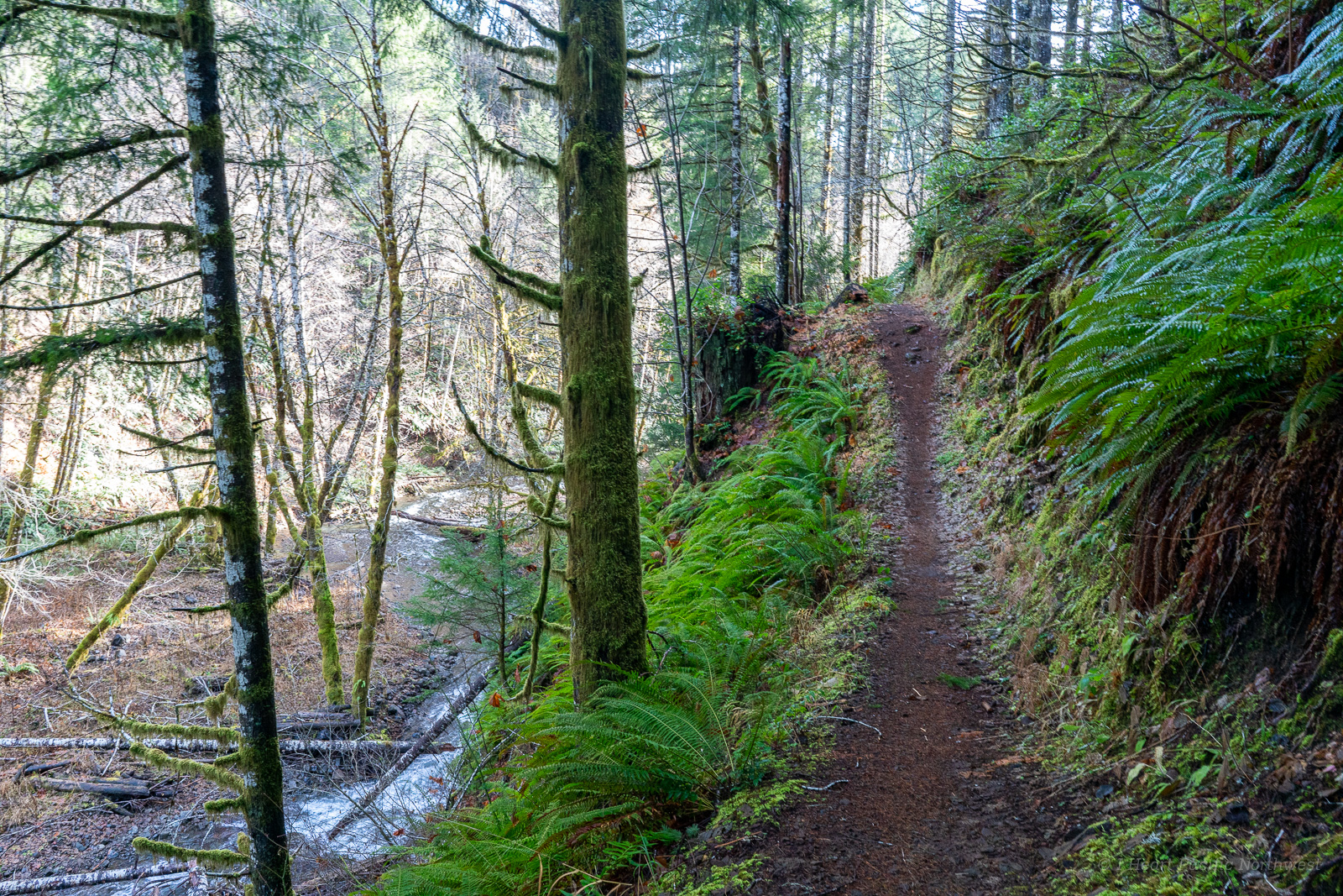 Oregon Coast Range: Gales Creek hike