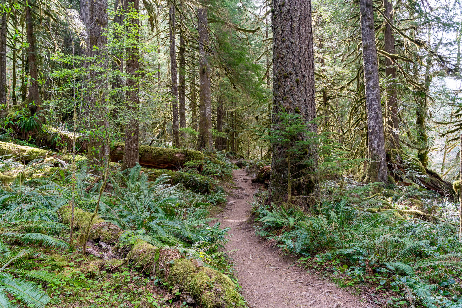 Old Salmon River Trail hike