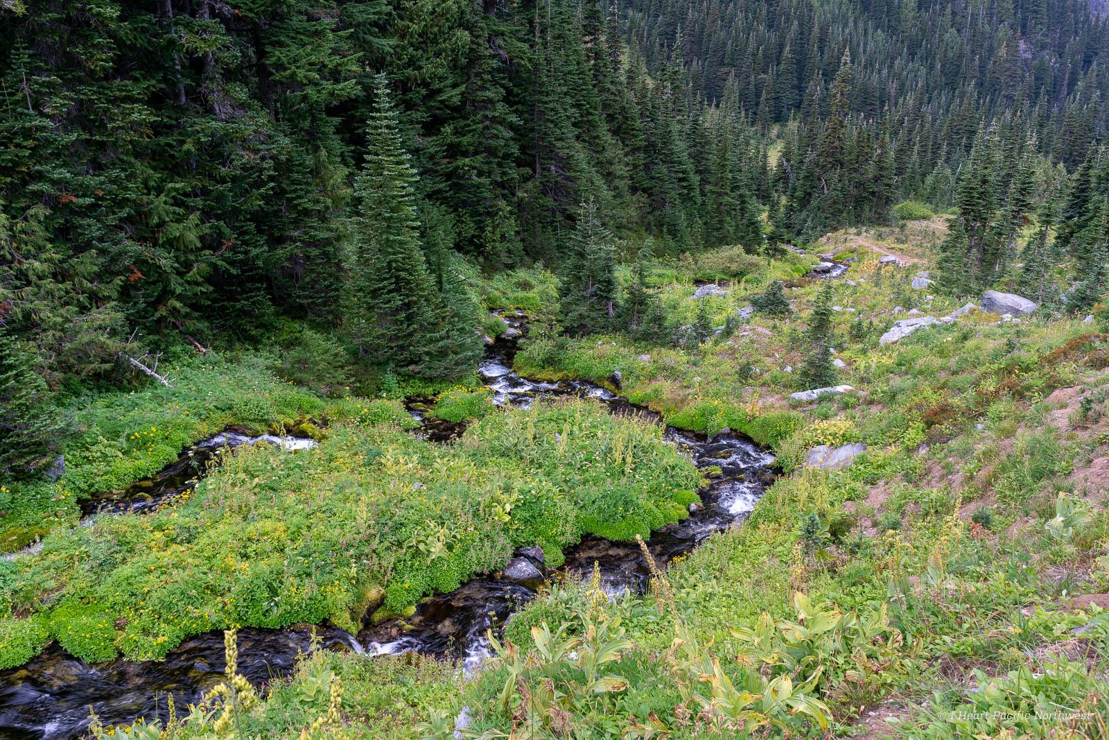 Mount Rainier - Berkeley Park backpacking trip