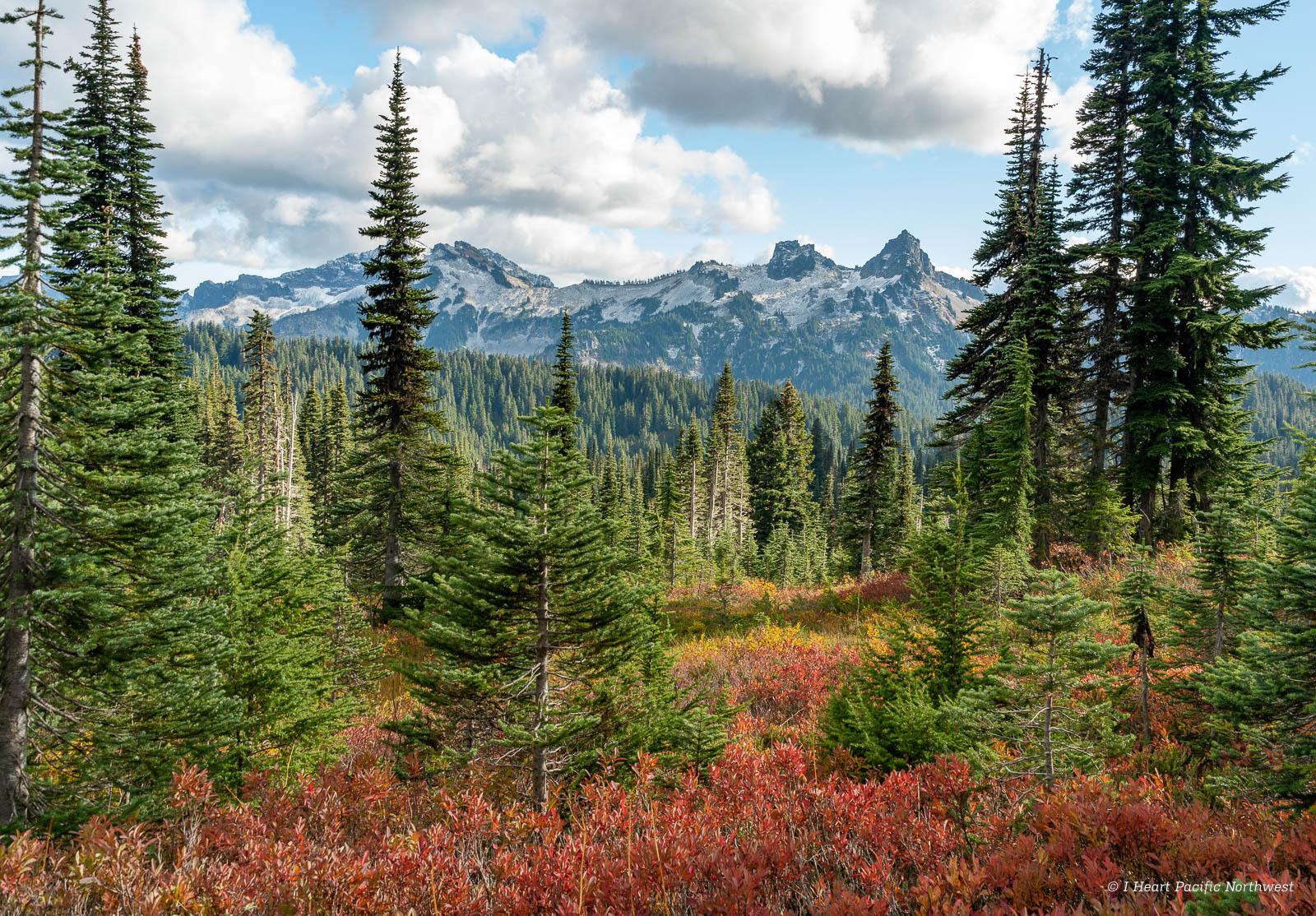 Mount Rainier National Park - Paradise in the fall